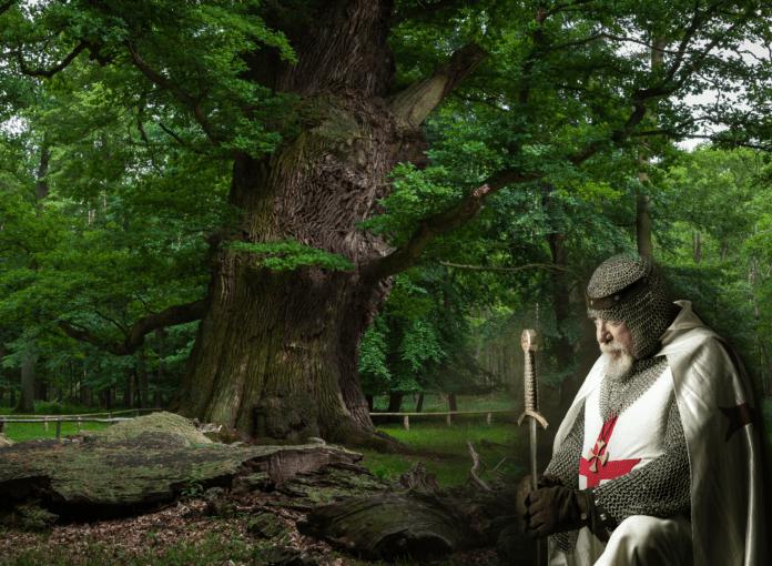Ivenack forest oak tree